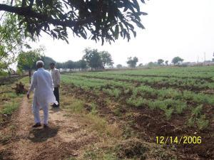 Walking around the fields
